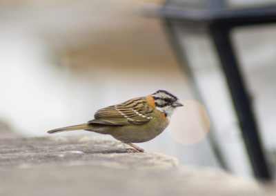 Pássaro_01